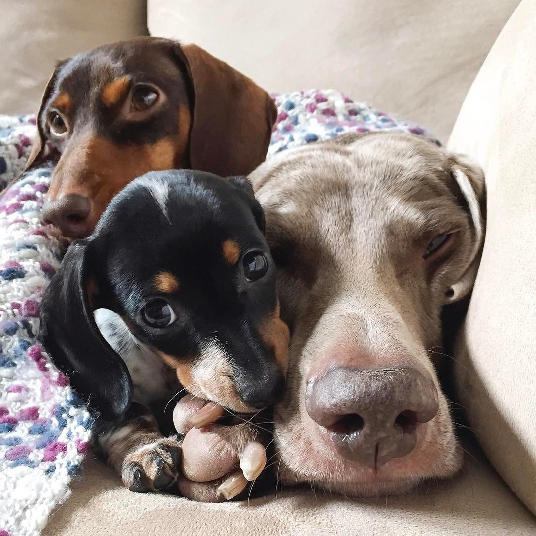 See Instagram Photos And Videos From Harlow Sage Indiana Amp Reese Harlowandsage Cute Animals Animals Therapy Animals