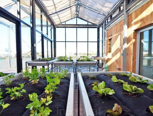 Stunning Solar Ed Grow Home Has A Thriving Veggie Greenhouse At Its Core