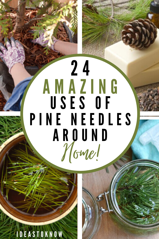 5d68ae717c740f5d7b77747195e19cbe - Are Pine Needles Good For Gardens