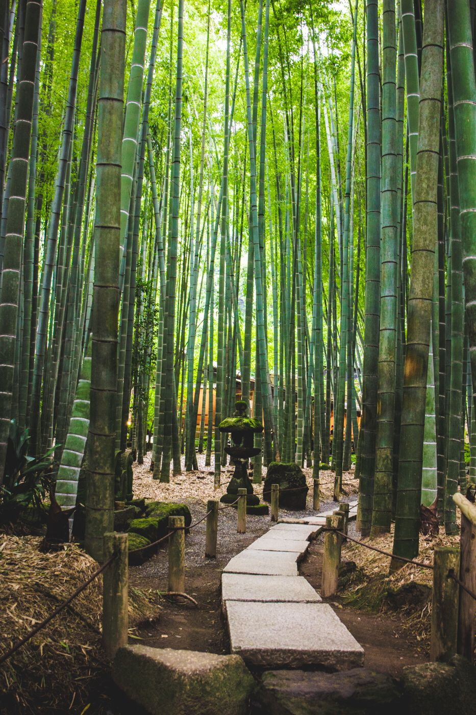 Bamboo Forest At Hokokuji Temple Japan With Images Japan