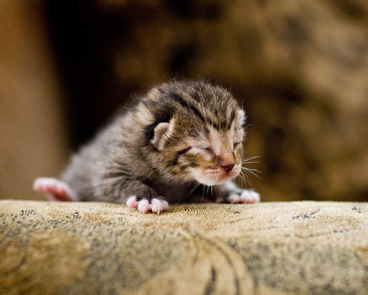 Cute Little Kitten Portrait Photography Ideas Pet Photos And Cat Pictures Outdoors In 2020 Animal Photo Holiday Pet Photos Holiday Pet Photography