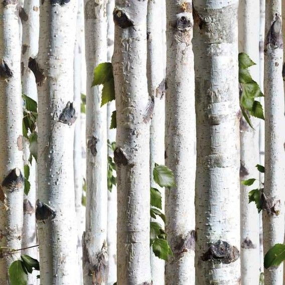 Papier peint Forêt trompe lu0027oeil (Rouleau  10 m) Trompée - repeindre du papier peint