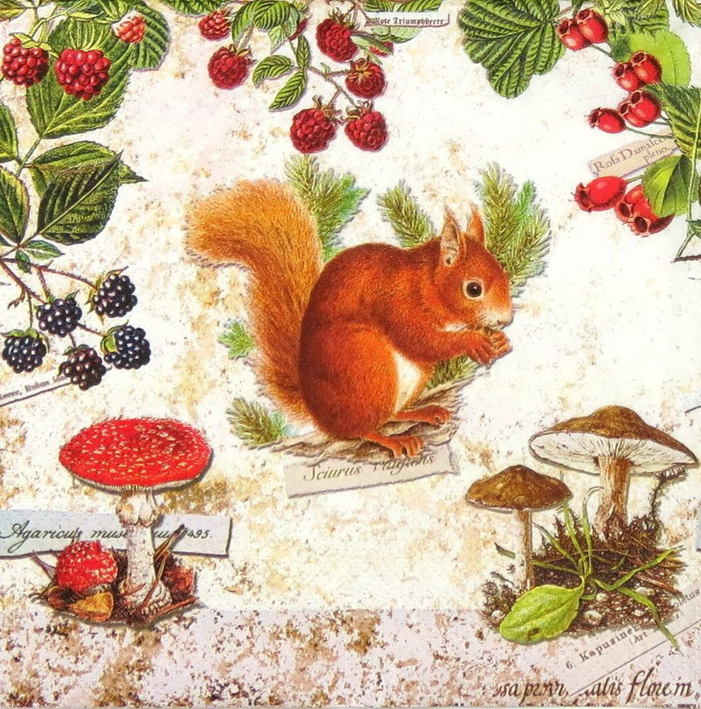 4x Paper Napkins for Decoupage Eating Squirrel