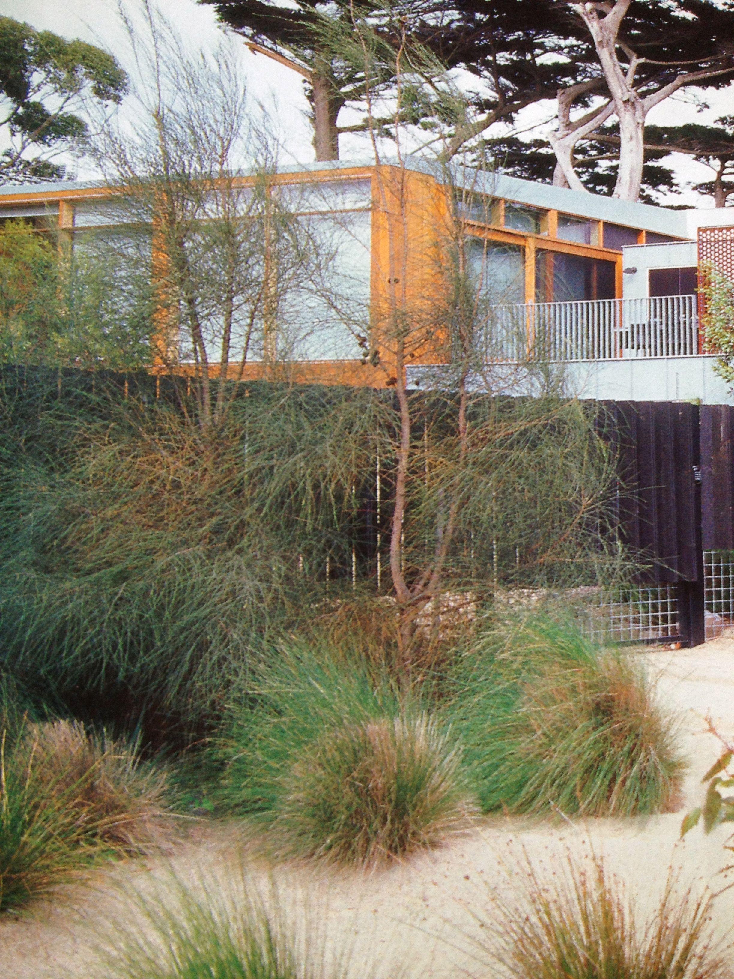 native garden  fiona brockhoff