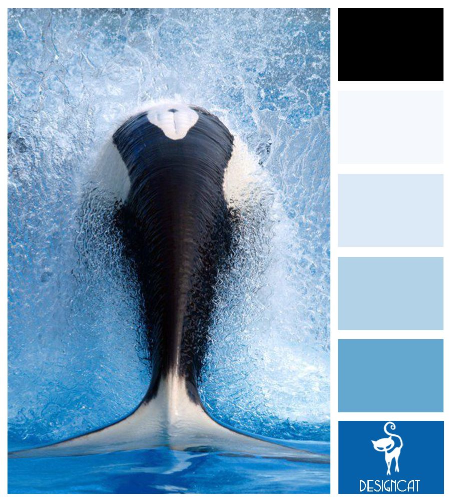 Whale Splash: Black, White, Blue, Pastel, Royal - Colour Inspiration pallet