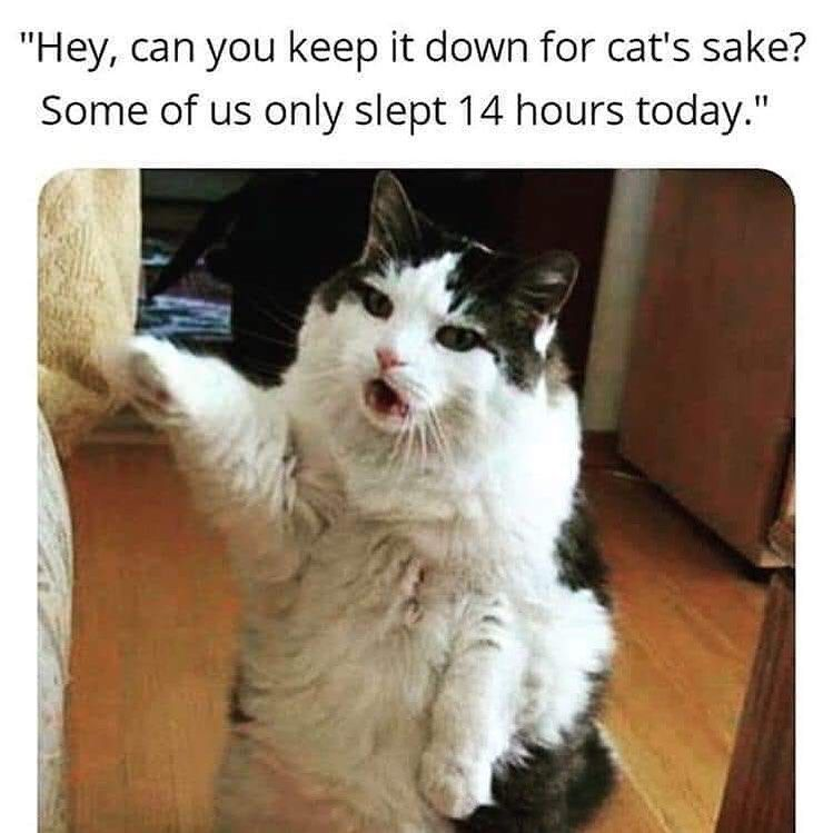 Only 14 Hours Smh Funny Cat Memes Cat Memes Cats