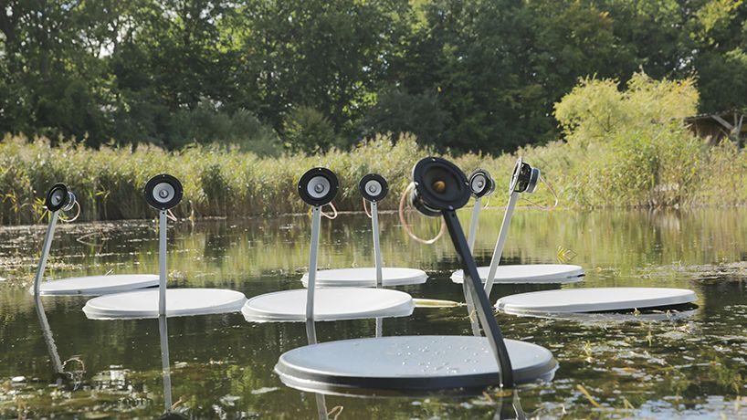 marco barotti swans
