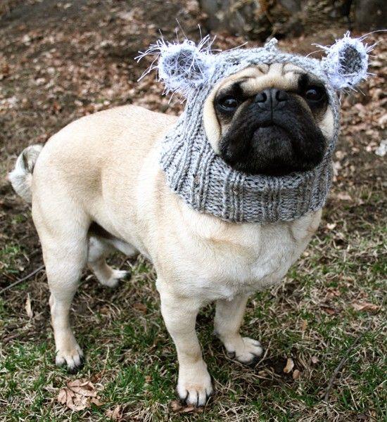 Baby Koala Dog Hat Pug Hat Pug Hats Dog Clothing Pet Cloting Dog Costume Dog Hats All You Need Is Pug Koala Bear Dog Hat Baby Koala