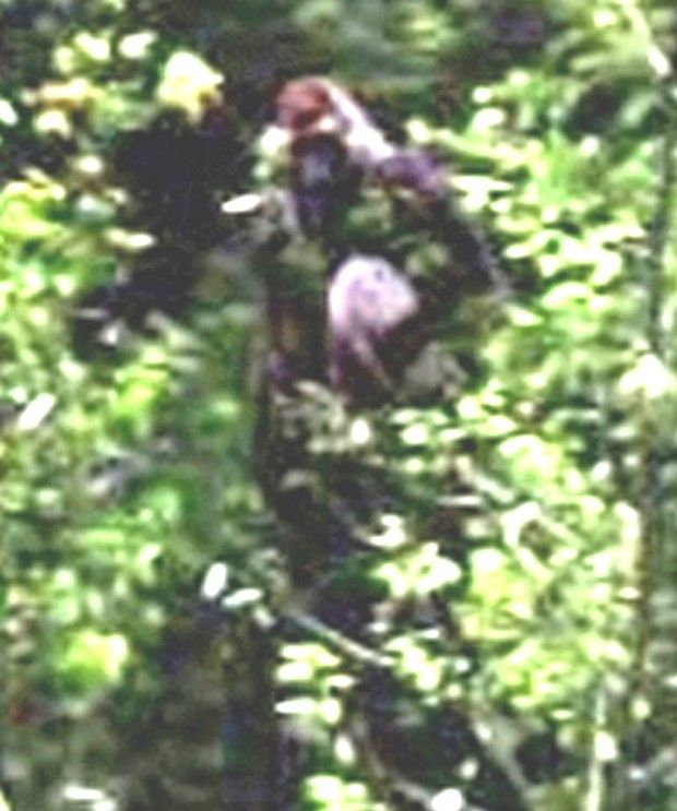Could This Be A Possible Bigfoot Sighting
