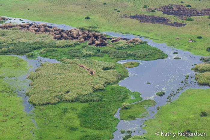 Bangweulu swamps, Zambia - Shoebill Safari - Birding Safari