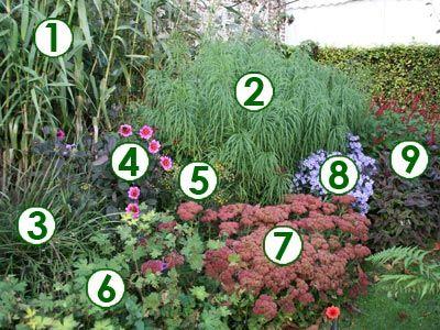un massif adoss de fleurs d 39 automne sc nes de jardins jardin d ombre pinterest massif. Black Bedroom Furniture Sets. Home Design Ideas