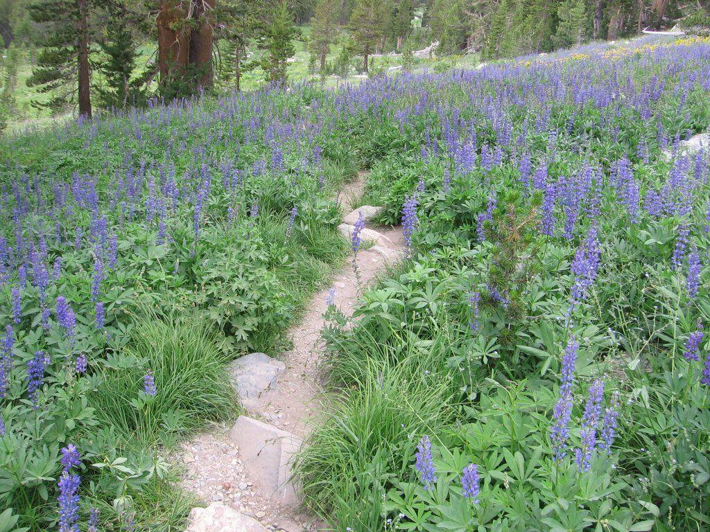 Wildflower Garden! : Photos, Diagrams U0026 Topos : SummitPost