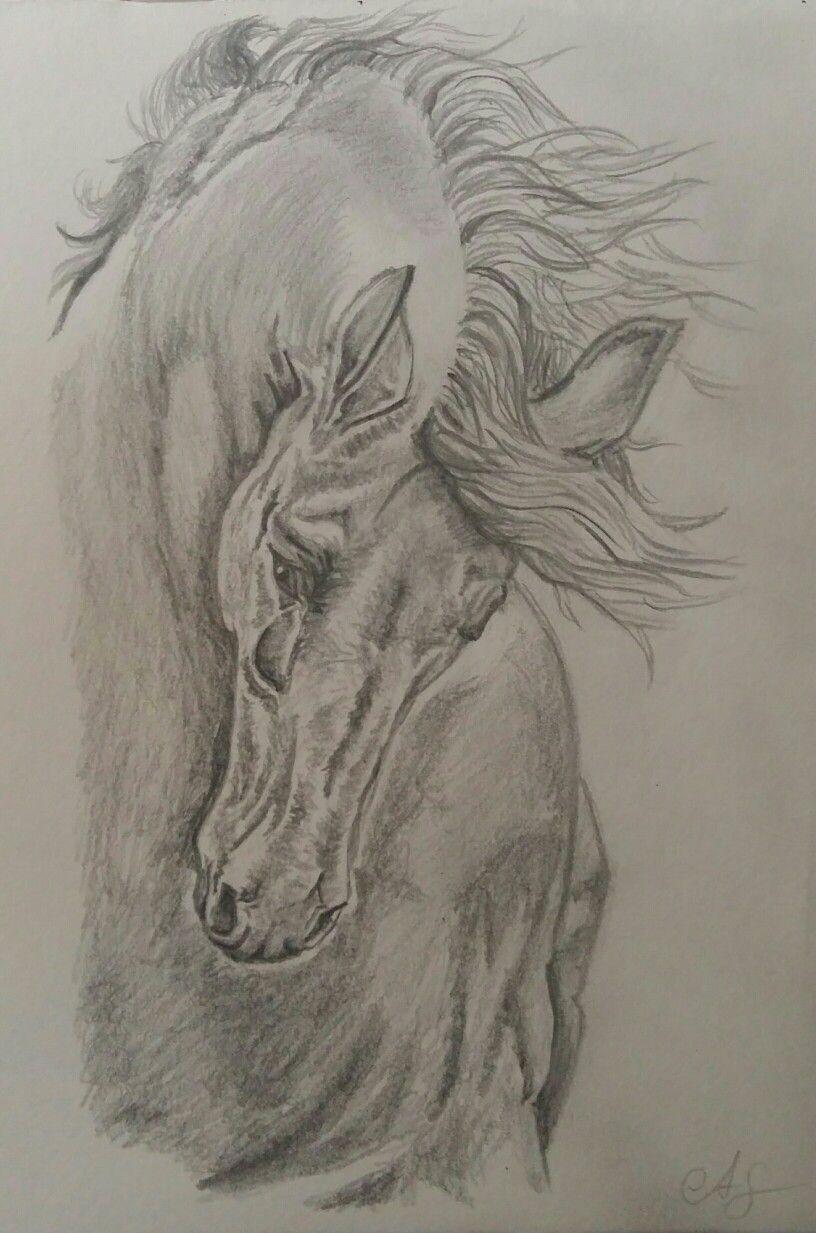 Pferd gezeichnet nach Vorlage | ❗Draw it❗ | Pinterest | Drawings ...