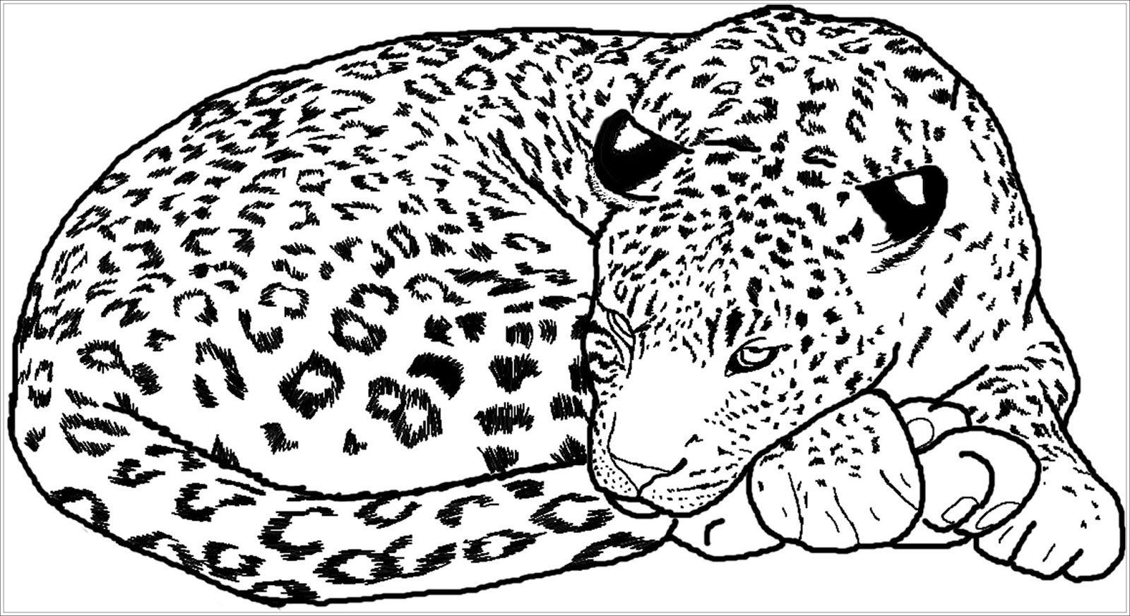 √ malvorlagen kostenlos leopard  leopard von hinten