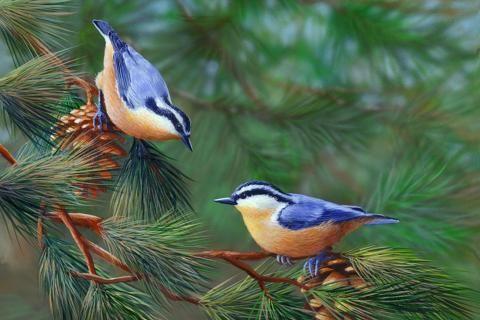 pájaros en la rama precioso canto agradable naturaleza hermoso bosque de árboles lindos cono ramas de colores muy dulce pequeña canción adorable