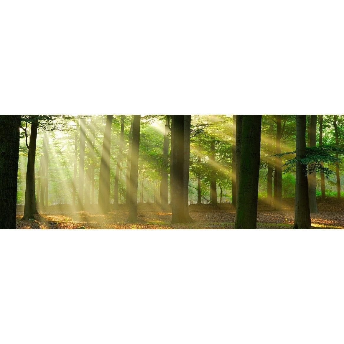 Cortesi Home Rays of Light Tempered Glass Wall Art, 16\