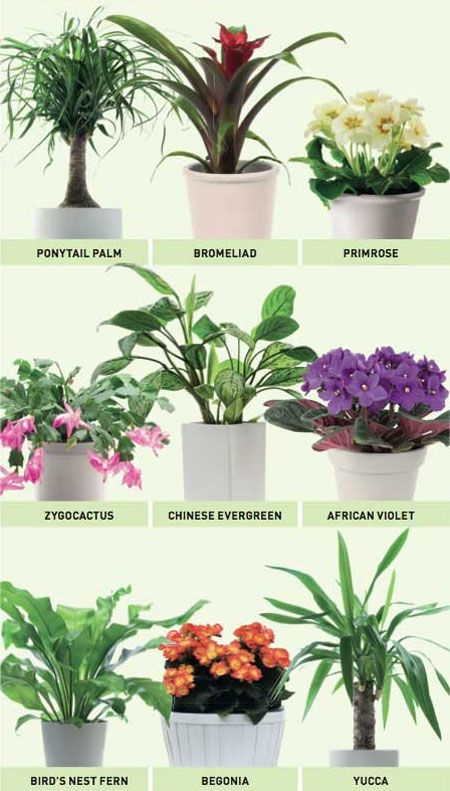 Plants Suitable For Bathroom