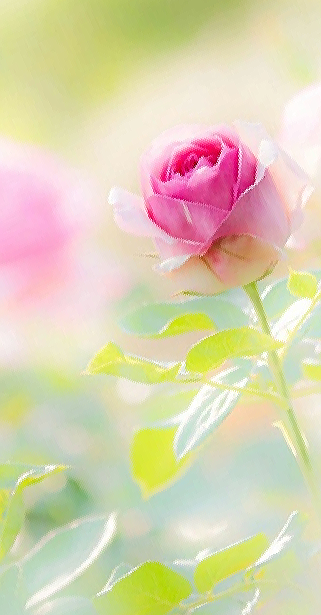 Don T Wait Life Goes Faster Than You Think Flower Phone Wallpaper Beautiful Flowers Wallpapers Beautiful Rose Flowers,Pictures Of Princess Margaret And Roddy Llewellyn