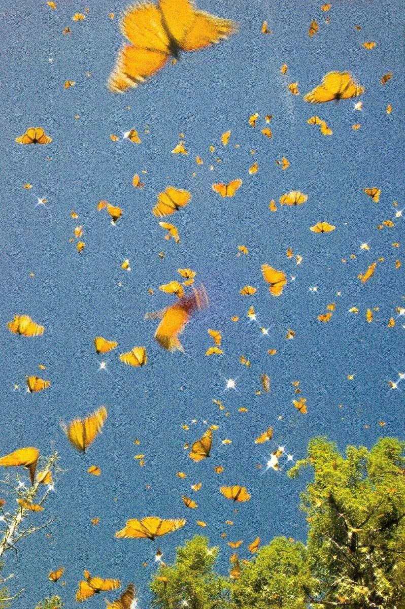 𝕡𝕚𝕟𝕥𝕖𝕣𝕖𝕤𝕥 𝕞𝕚𝕞𝕤𝕒𝕪𝕝𝕠𝕤𝕖𝕣 In 2020 Aesthetic Wallpapers Butterfly Wallpaper Iphone Butterfly Wallpaper