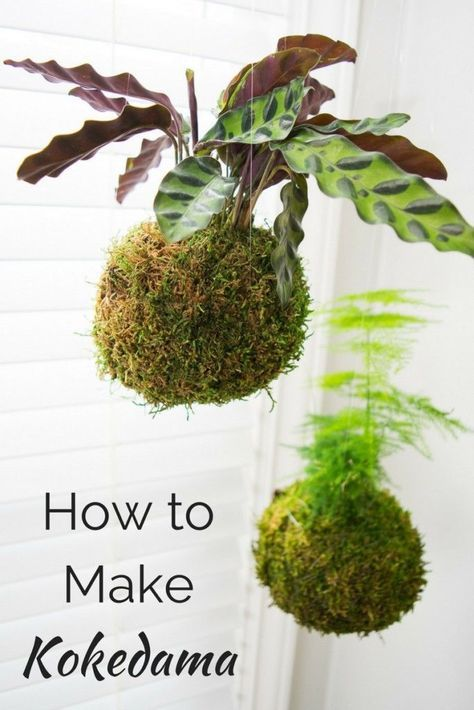 Kokedama or Japanese moss balls are easy to make and look amazing hanging in a bright window! Learn how to make your own in this handy tutorial. #kokedama #indoorgardening