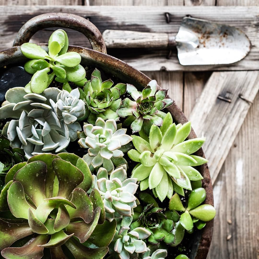 ***For My Garden*** Image By Little Yellow Cottage