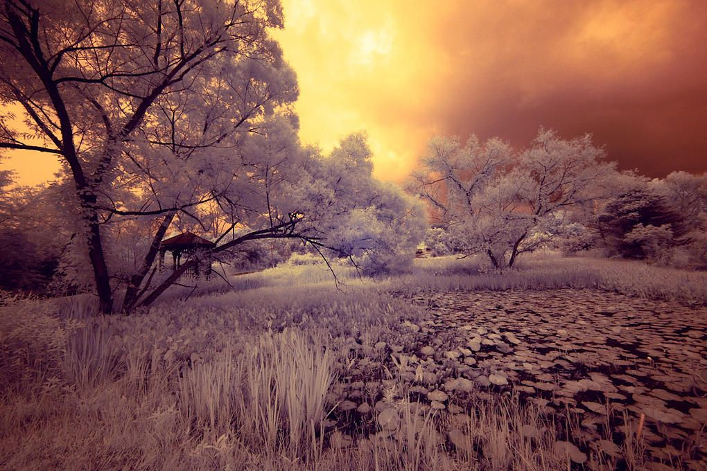 kimhambor.com | INFRARED GALLERY 3 - Water Garden by Kim Hambor - Florida Landscape - Sunset