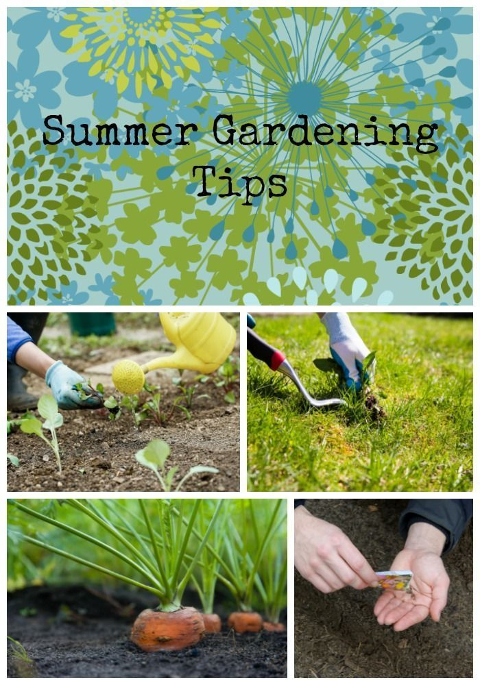Greener on the Inside: Summer Gardening Tips - http://www.ambius.com/blog/summer-gardening-tips/