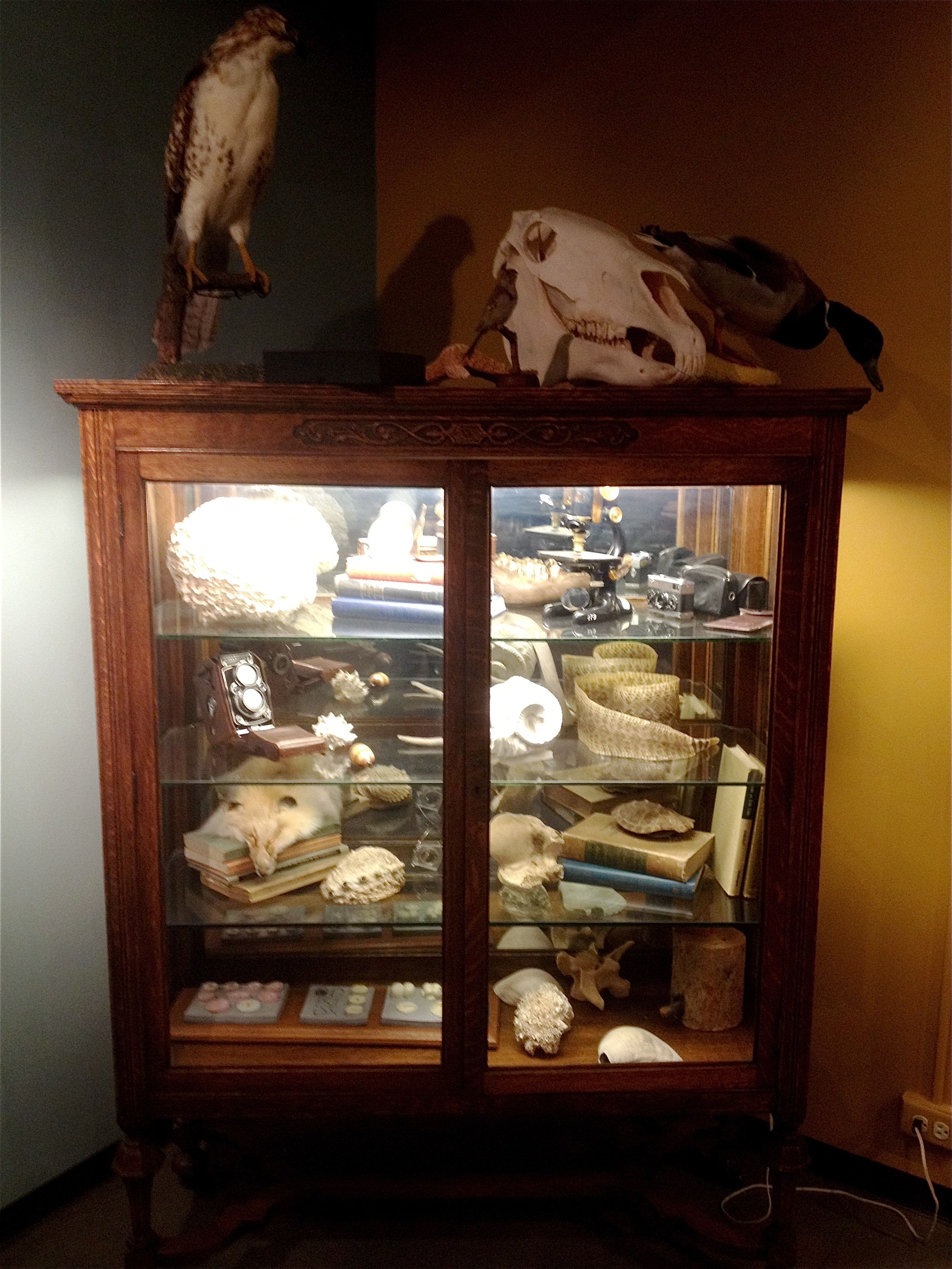 Curiosity Cabinet The University Of Colorado Museum Of