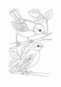 Vögel Zum Ausdrucken (mit Bildern) | Vögel zeichnen ...