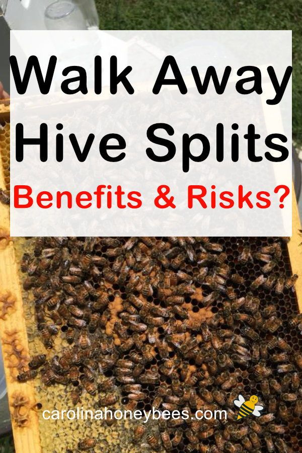 How to Split a Beehive-The Basics in 2020 | Bee keeping ...