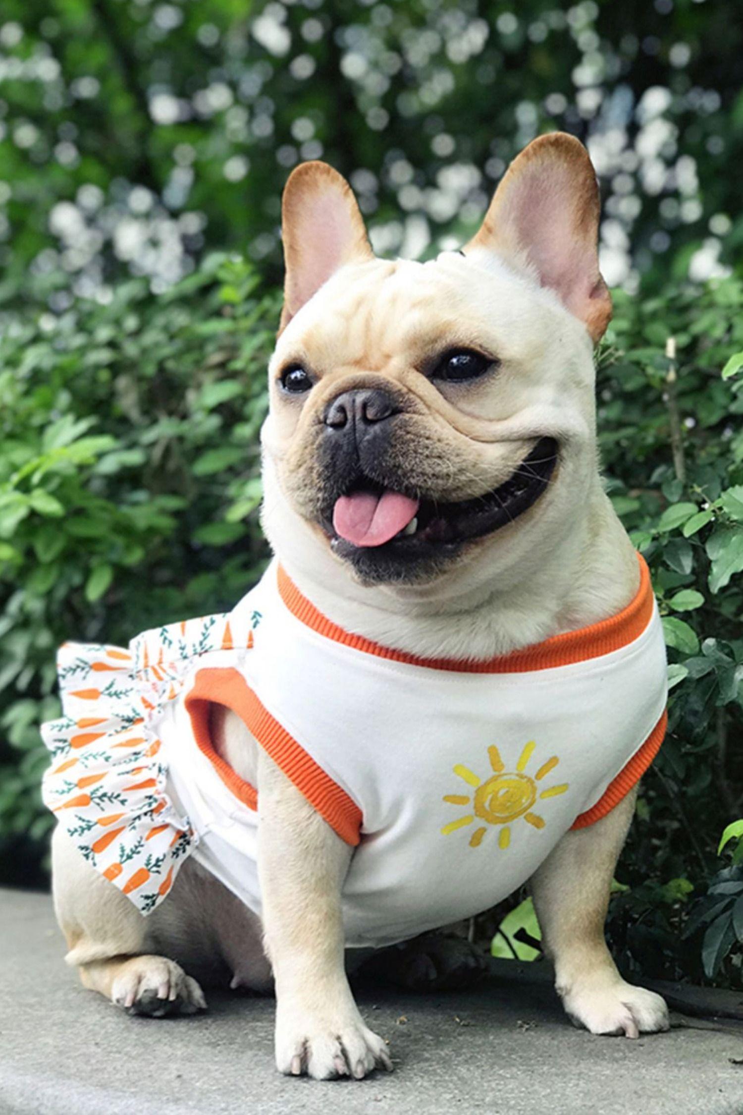 Cute Summer Dress for Bulldogs Dog shirt, Dogs, Dog in heat