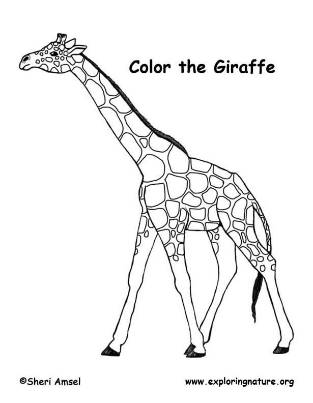 Giraffe Coloring Page Zoo Coloring Pages Animal Coloring Books