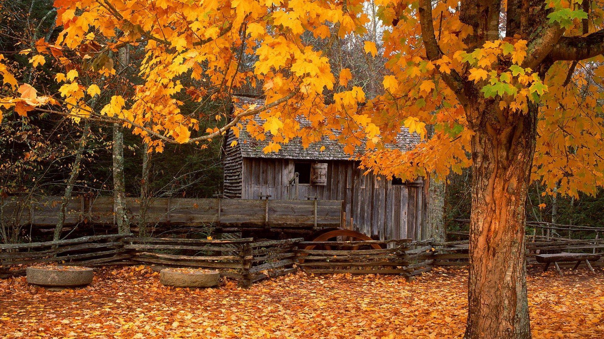 Autumn Screensavers Backgrounds