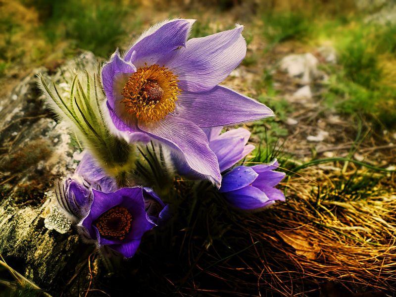 Tavasz  -- Spring