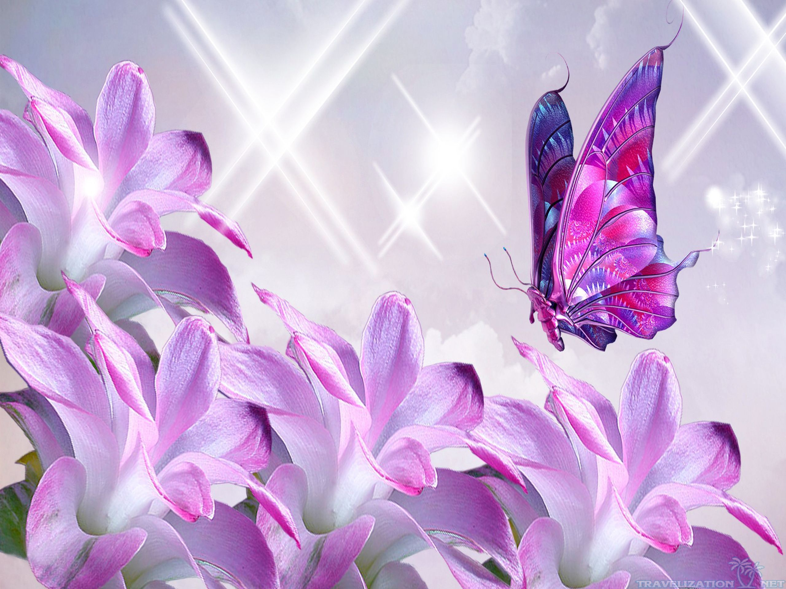 Lavender Flowers Wallpapers Android Apps On Google Play