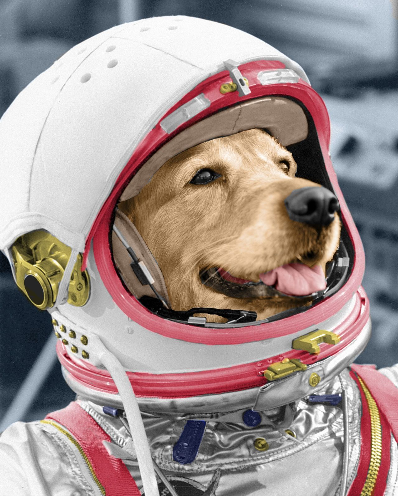 Lab In Space Suit Space Dog Dog Spaces Dog Door