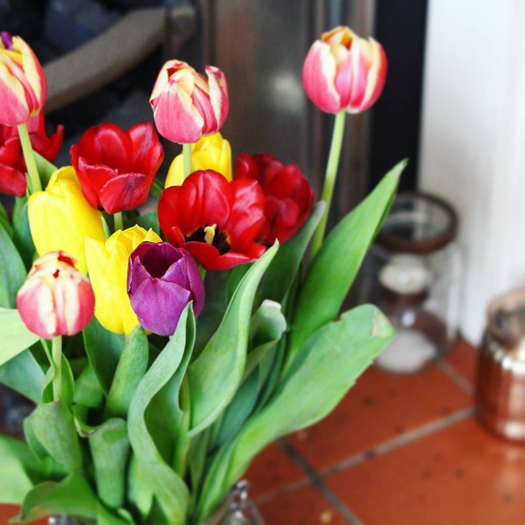 Flowers W Arrived With A Bunch Of Tulips Last Weekend And They Are