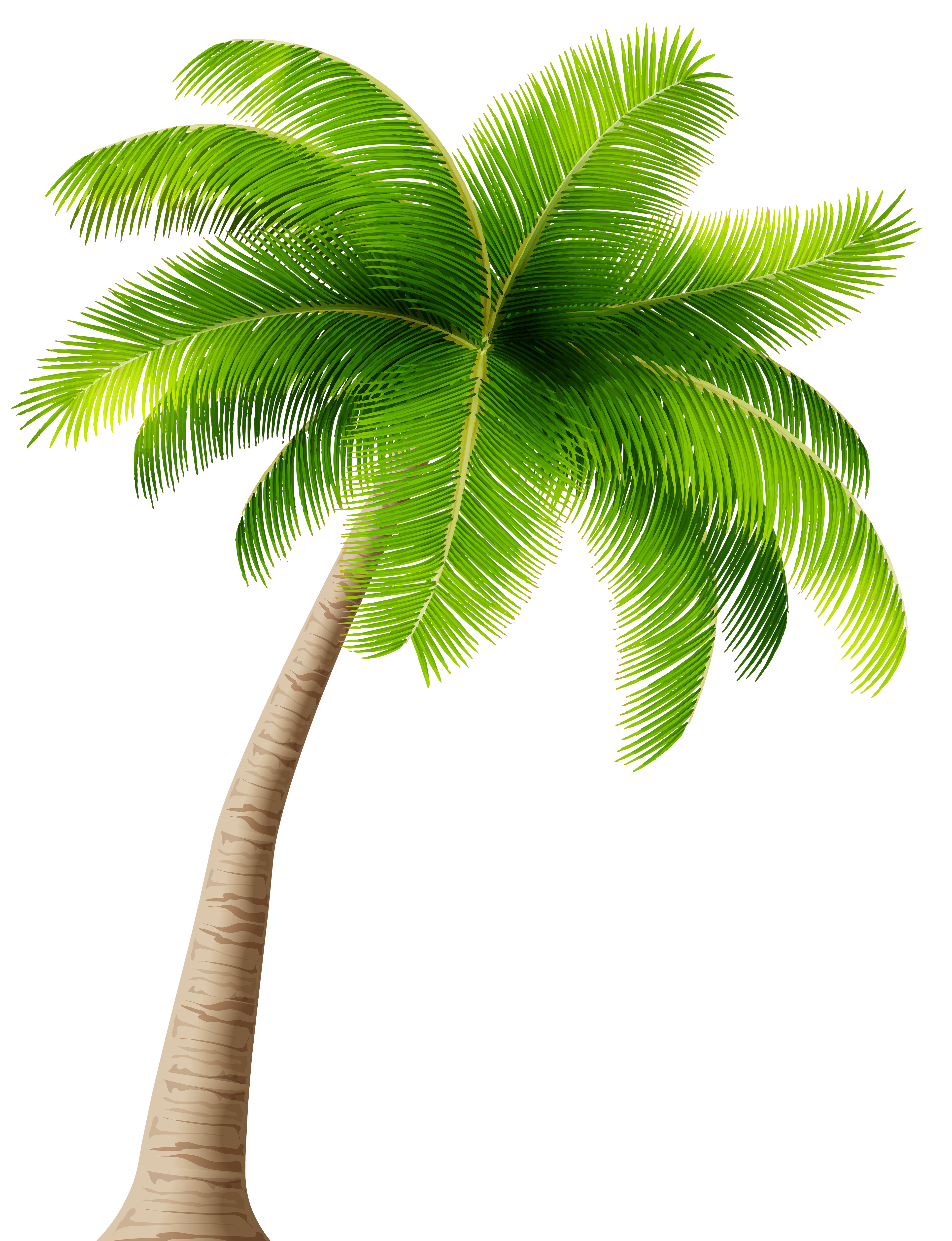 Palm Transparent Png Image Gallery Yopriceville High Quality Images And Transparent Png Free Cli Palm Tree Clip Art Coconut Tree Drawing Palm Tree Drawing