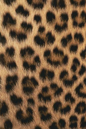 'Leopard Skin Pattern' Photographic Print - DLILLC | Art.com