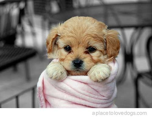 25 Dogs Bundled Up For Winter Cute Animals Puppy Dog Pictures Baby Animals