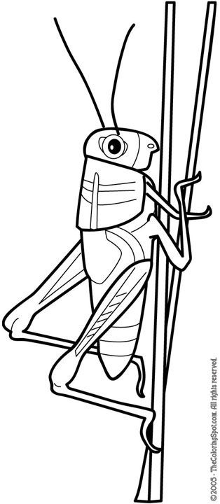 grasshopper colouring pages - Google Search | Insects | Pinterest ...