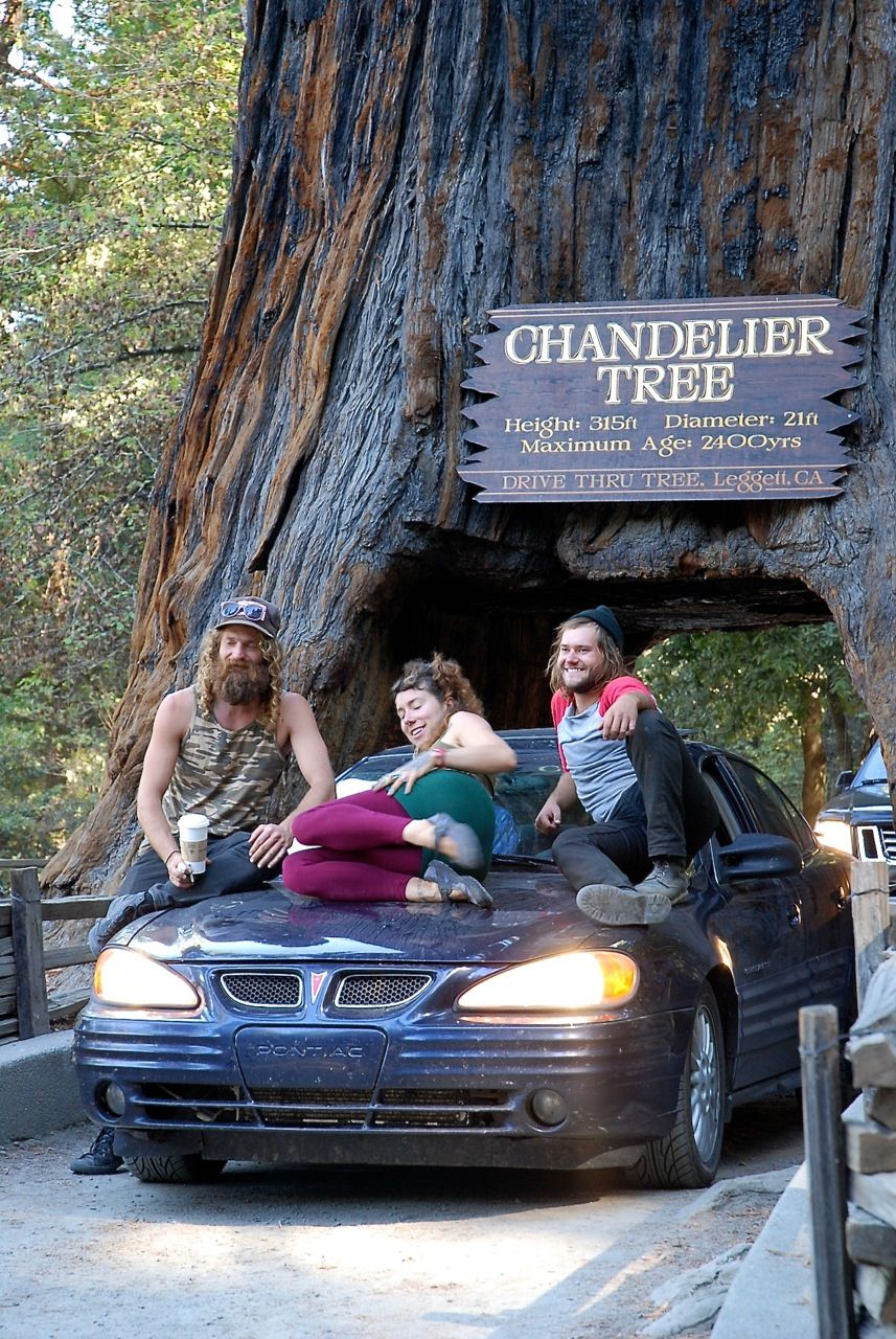 Hippies on the hood of their car posing underneath the chandelier hippies on the hood of their car posing underneath the chandelier tree in leggett ca arubaitofo Choice Image