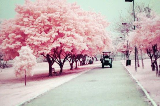 driving down a pink street