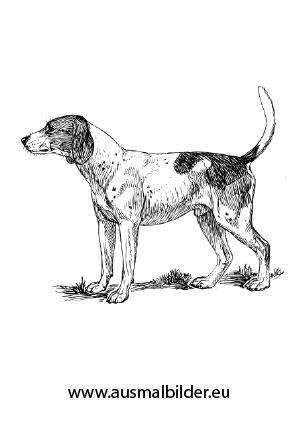 Pin Auf Ausmalbilder Hunde