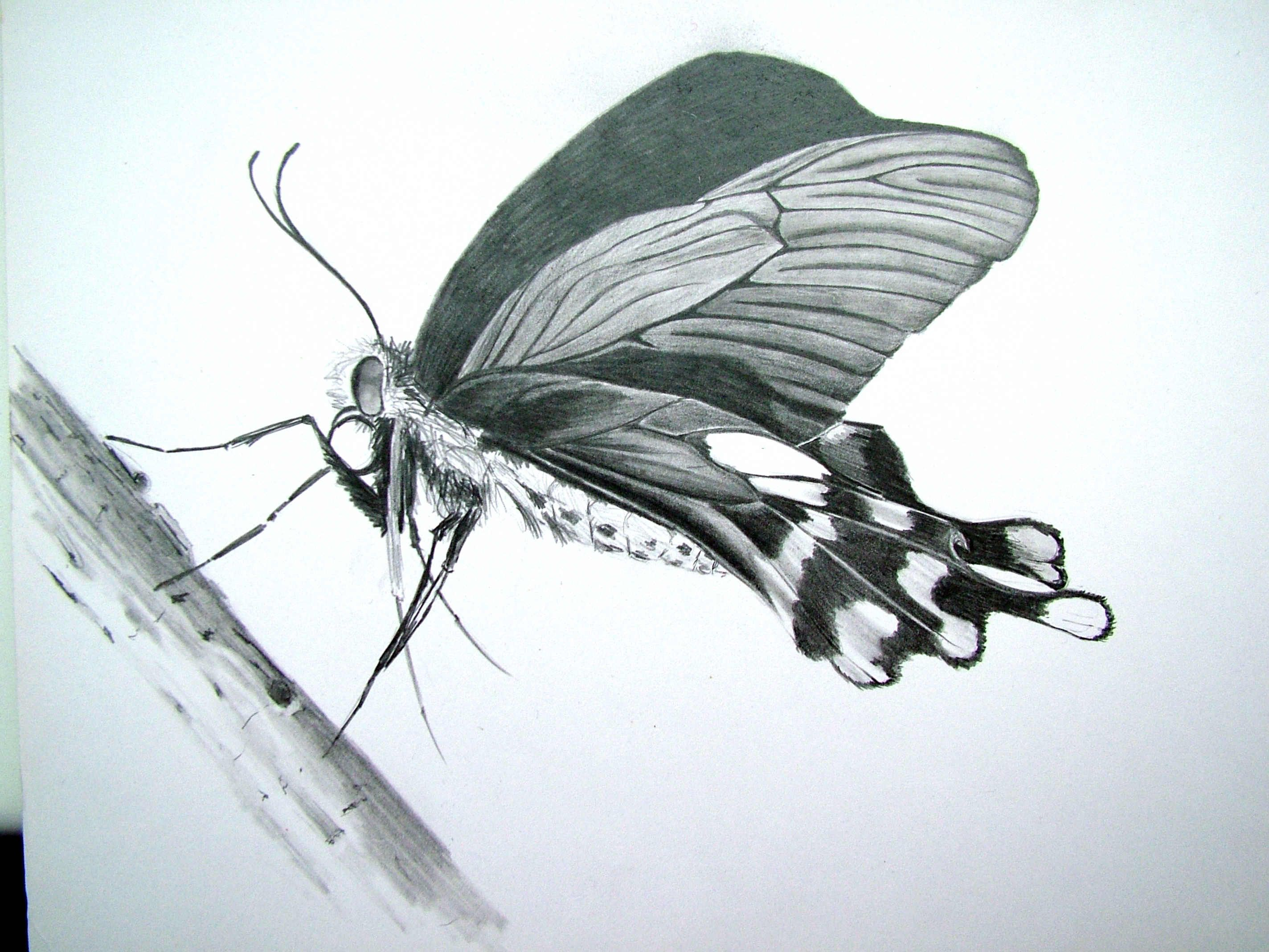 Butterfly Pencil Drawing | Paint Shop | Pinterest