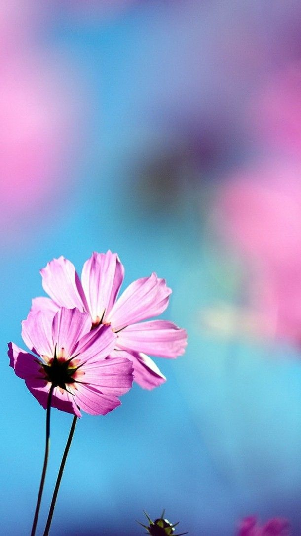 Beautiful Flowers In Full Bloom Android Phone Wallpapers