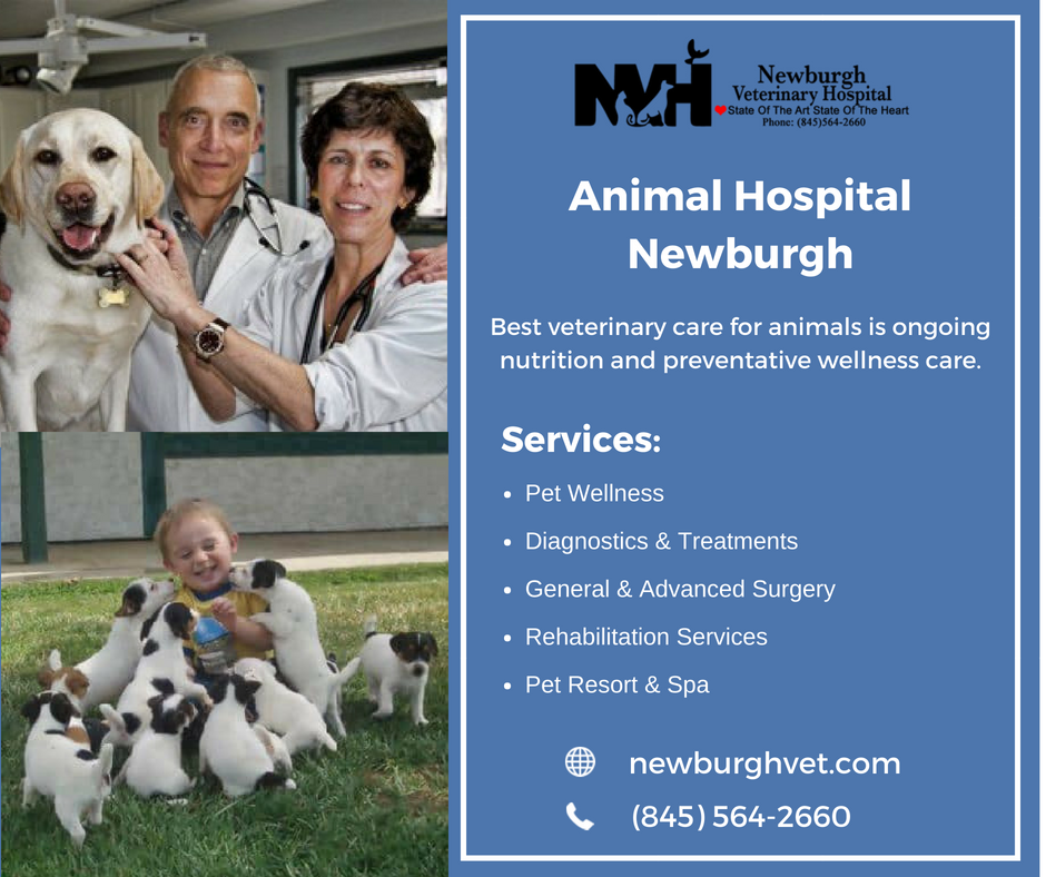 Newburgh Veterinary Hospital staff keep your pet healthy