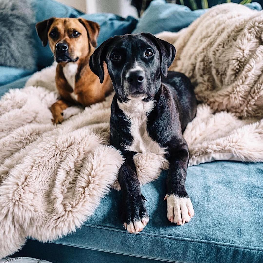 The best boys via jessannkirby Miss my dog, Dog mom