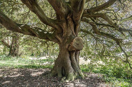 St. Anne's Park - [ http://photography.osx128.com/st-annes-park-33/ ] #ParksAndGardens