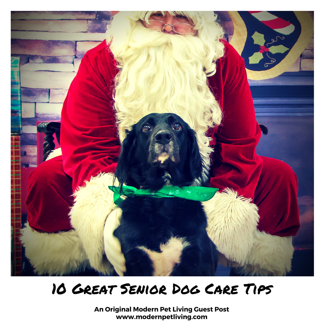 Some say training a puppy is the most difficult stage of dog care, but the challenges of a senior dog can be just as difficult. To help, we asked a Modern Pet Living reader for advice.  10 Great Senior Dog Care Tips: https://www.modernpetliving.com/blog/10-great-senior-dog-care-tips . . . . #ModernPets #crueltyfree #modernpetliving #modernlifepets #profitstocharity #animalcharity #dog #dogs #dogproducts #dogtreats #dogfoods #mansbestfriend #dogtraining #pettraining #doghealth #doglifestyle